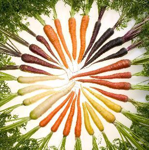 zanahorias pequeña